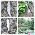 拳--成さんの北海道富良野市での釣果写真