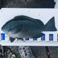 ぽよさんの静岡県賀茂郡での釣果写真