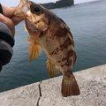 Takashi Sさんの長崎県北松浦郡での釣果写真