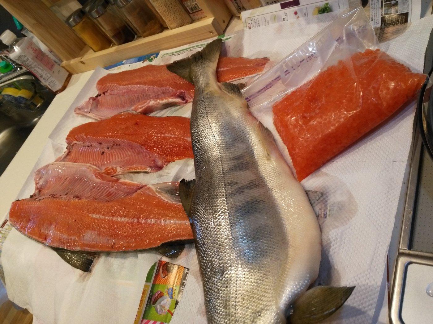 kazu snowyさんの投稿画像,写っている魚はサケ