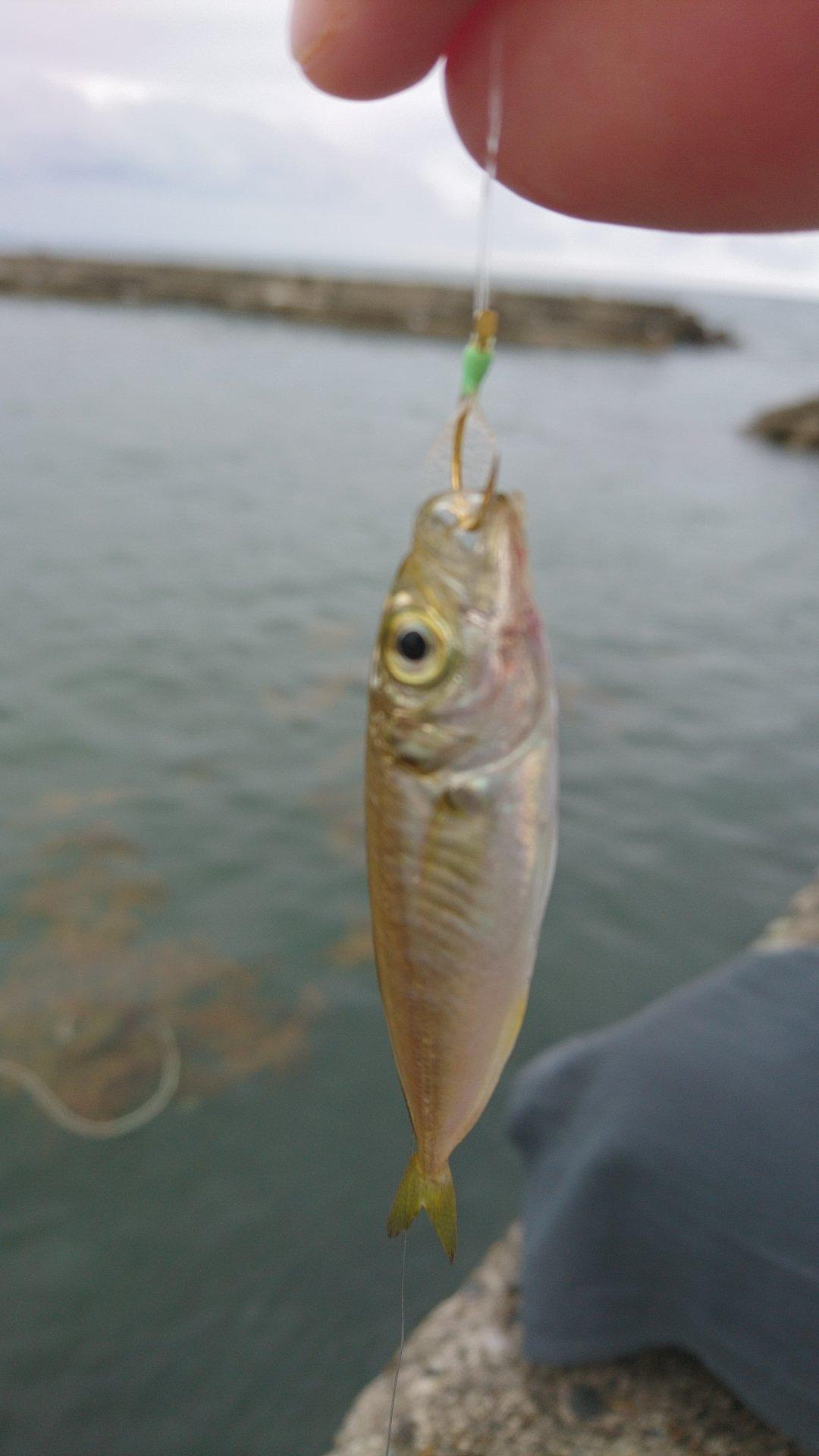 はじめちゃんさんの投稿画像,写っている魚は