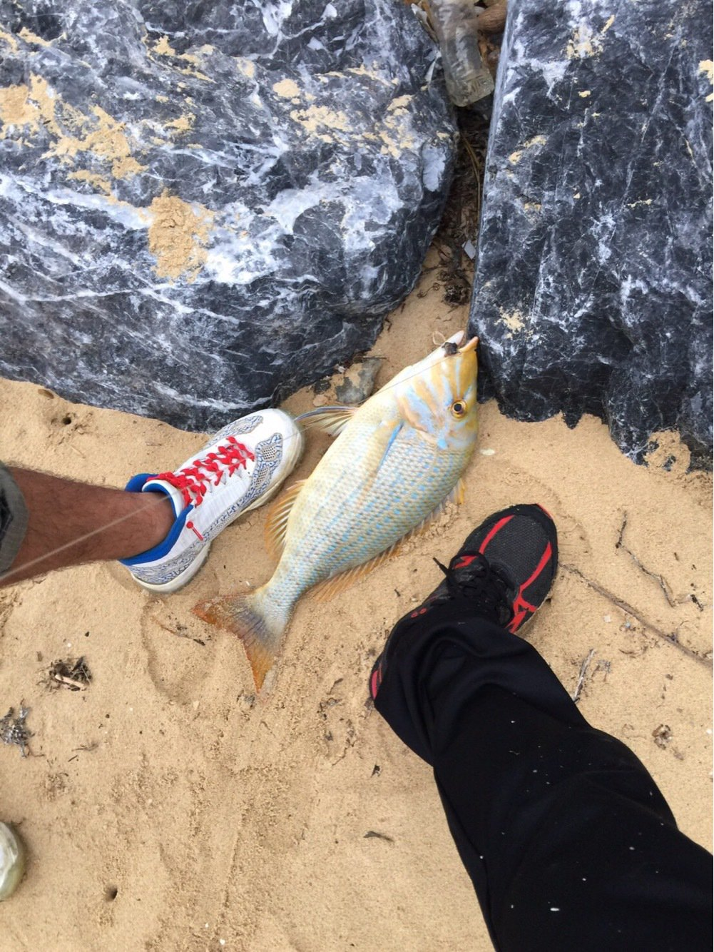 tomy124さんの投稿画像,写っている魚はハマフエフキダイ