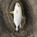 プレジャーさんの宮崎県日南市での釣果写真