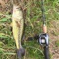 TANAKAさんの栃木県での釣果写真