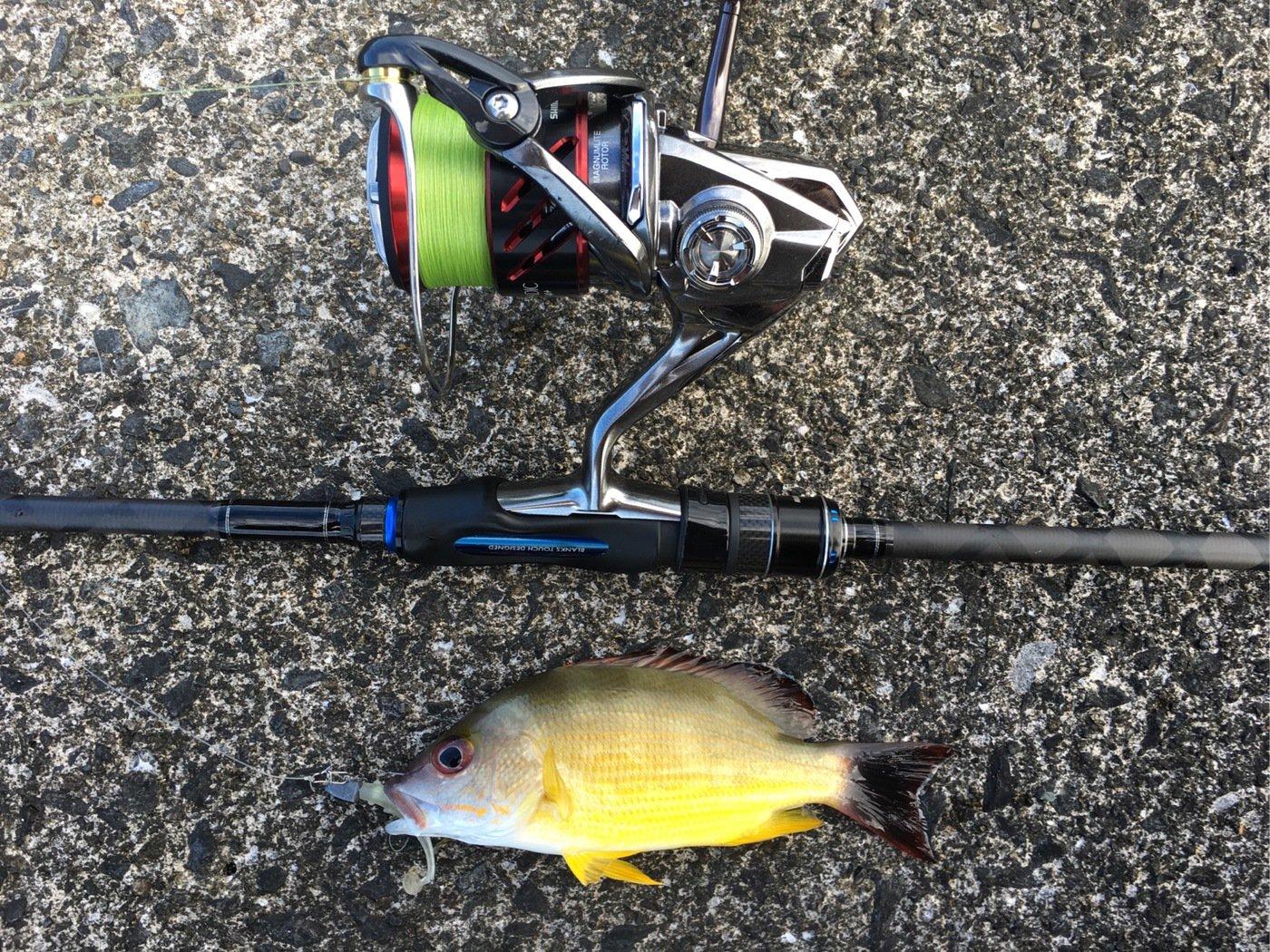 大五郎さんの投稿画像,写っている魚はフエダイ