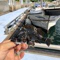 コウスケさんの山口県下松市での釣果写真