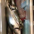 洋之☆さんのワラサの釣果写真