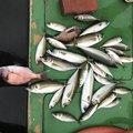 DAIさんの兵庫県洲本市での釣果写真