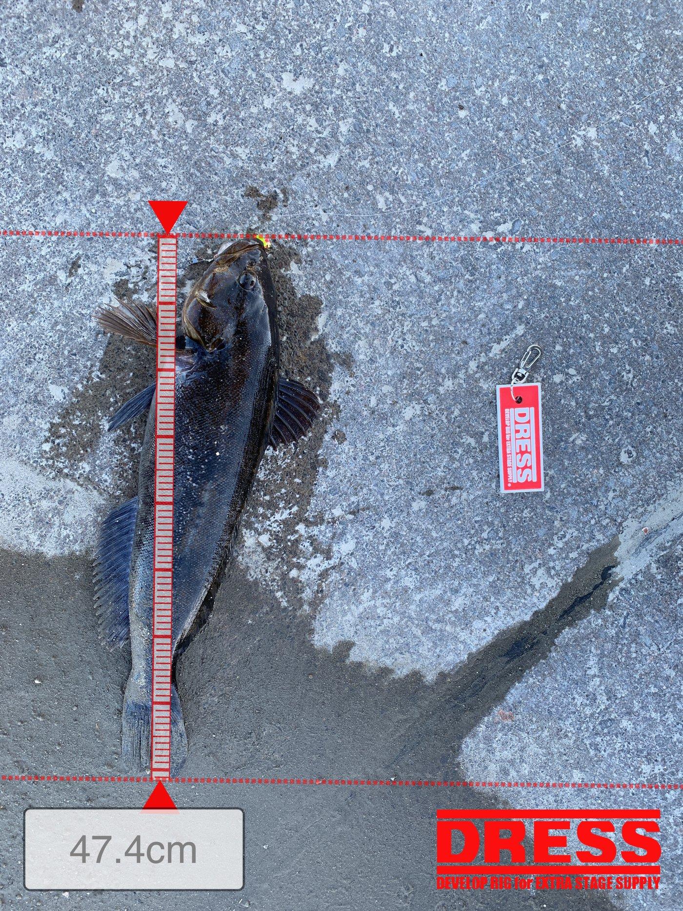 GKさんの投稿画像,写っている魚はアイナメ