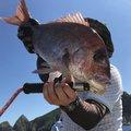 け〜たゴリラさんの鹿児島県枕崎市での釣果写真
