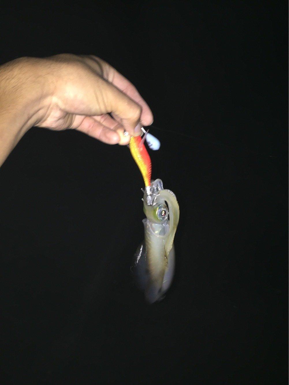 しょうとさんの投稿画像,写っている魚はアオリイカ