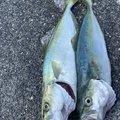 鮎川魚伸さんのブリの釣果写真