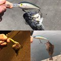 ガンマ似。さんの北海道有珠郡での釣果写真