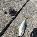 爆釣戦隊⭐︎さんの大分県大分市での釣果写真