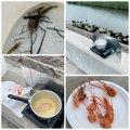 スイミー☆彡さんの千葉県山武市での釣果写真