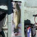 shallowman さんの奈良県での釣果写真