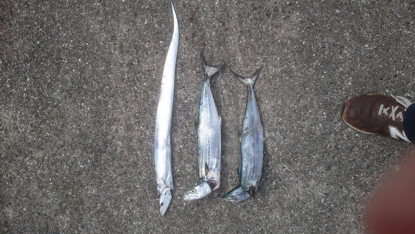 市場さんの投稿画像,写っている魚はタチウオ