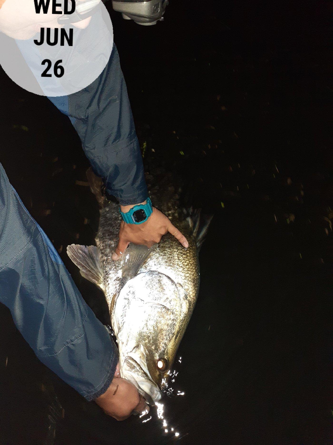 マサーノさんの投稿画像,写っている魚はアカメ,