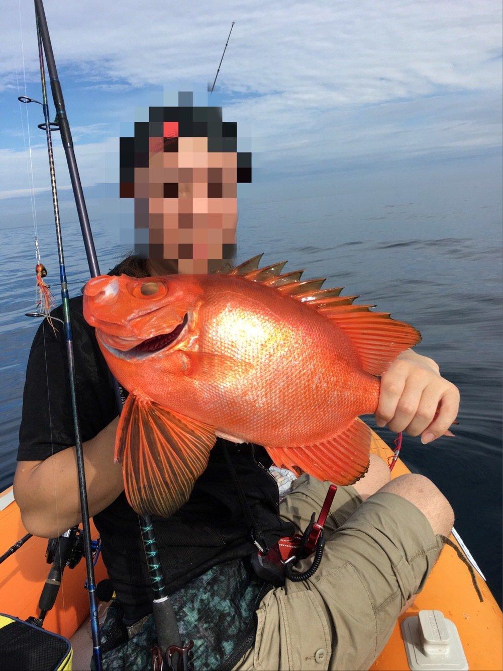 ぬこ好きさんの投稿画像,写っている魚はチカメキントキ