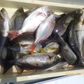 takaさんの三重県鳥羽市での釣果写真