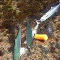 EARTH PAPAさんの新潟県西蒲原郡での釣果写真
