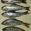 スーさんさんの新潟県中魚沼郡での釣果写真