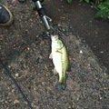 ディーンさんの長野県上田市での釣果写真