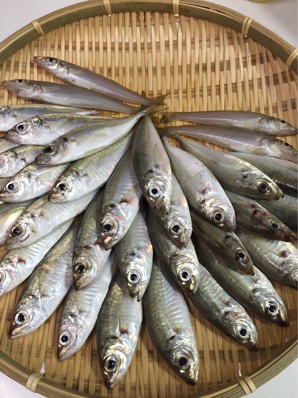しんのすけさんの投稿画像,写っている魚はアジ