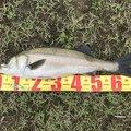 ケイチさんの秋田県由利本荘市での釣果写真