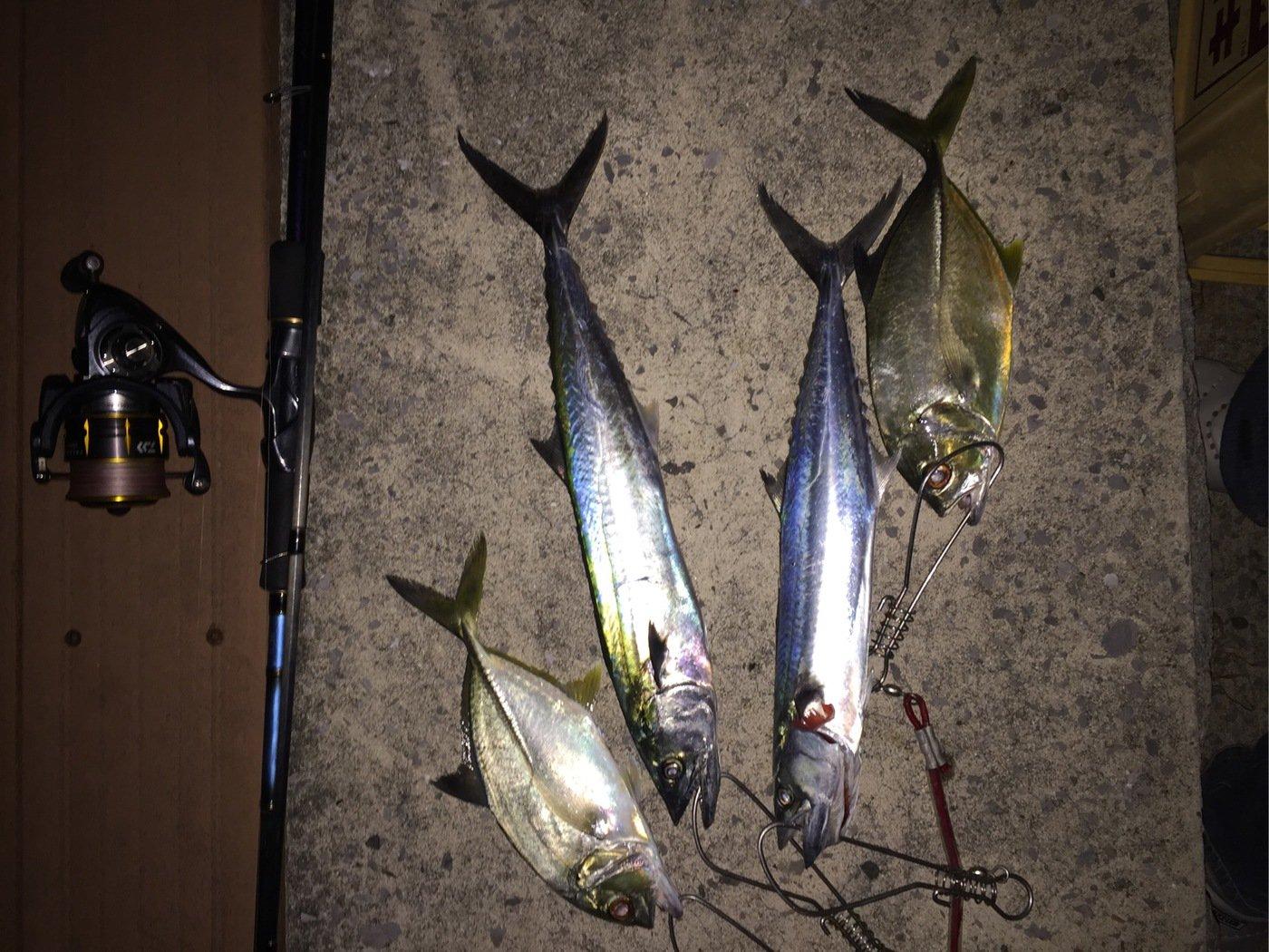 ヨウスケさんの投稿画像,写っている魚はサワラ