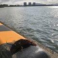 海坊主さんの鹿児島県出水市での釣果写真