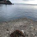 海坊主さんの鹿児島県阿久根市での釣果写真