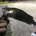 ゆうきさんの愛知県碧南市での釣果写真
