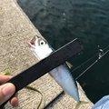 カツキさんの福岡県古賀市での釣果写真