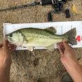 ラテス81さんの福岡県京都郡での釣果写真