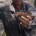 尾鷲キング亀さんの三重県北牟婁郡での釣果写真