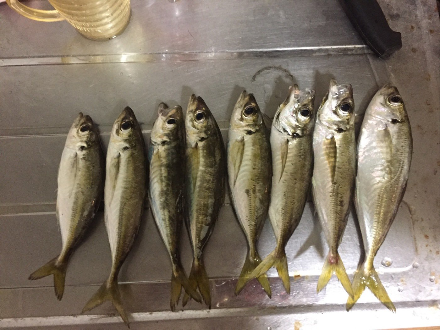 中島勇樹さんの投稿画像,写っている魚は