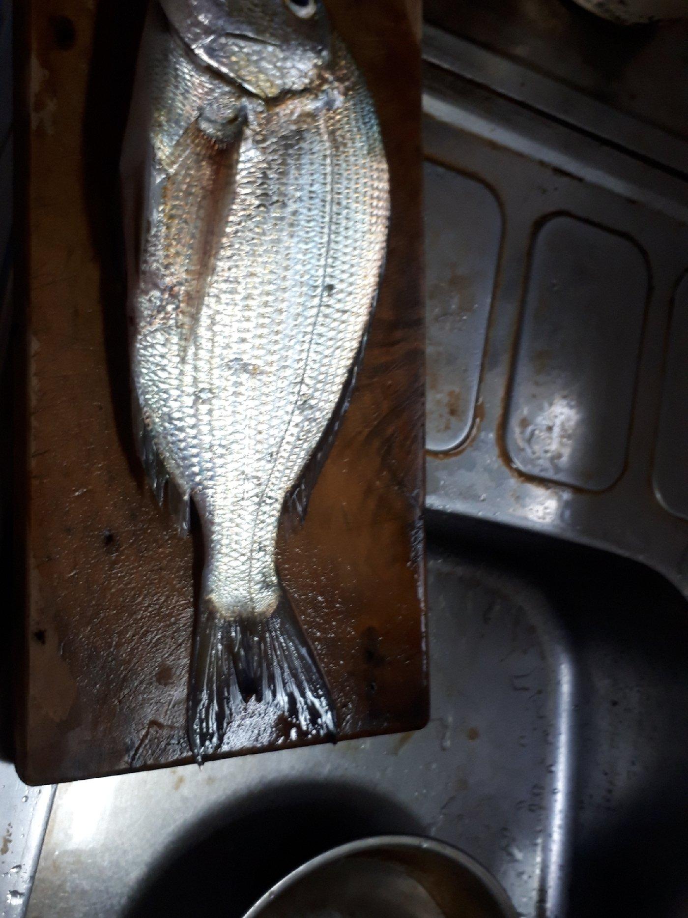 野村裕二さんの投稿画像,写っている魚は