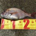 rin82さんの香川県丸亀市での釣果写真