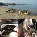 Ryukunさんの福岡県福津市でのスズキの釣果写真