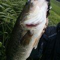 バス栗ん !さんの青森県つがる市での釣果写真