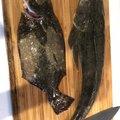 たかたかさんの福島県相馬市での釣果写真