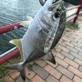 yoshiさんの沖縄県宜野湾市での釣果写真