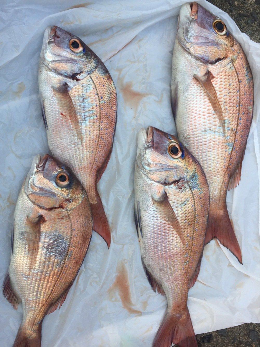 ロベルト本郷さんの投稿画像,写っている魚はマダイ