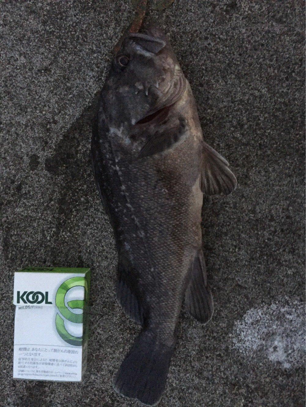 頭文字Dさんの投稿画像,写っている魚はソイ