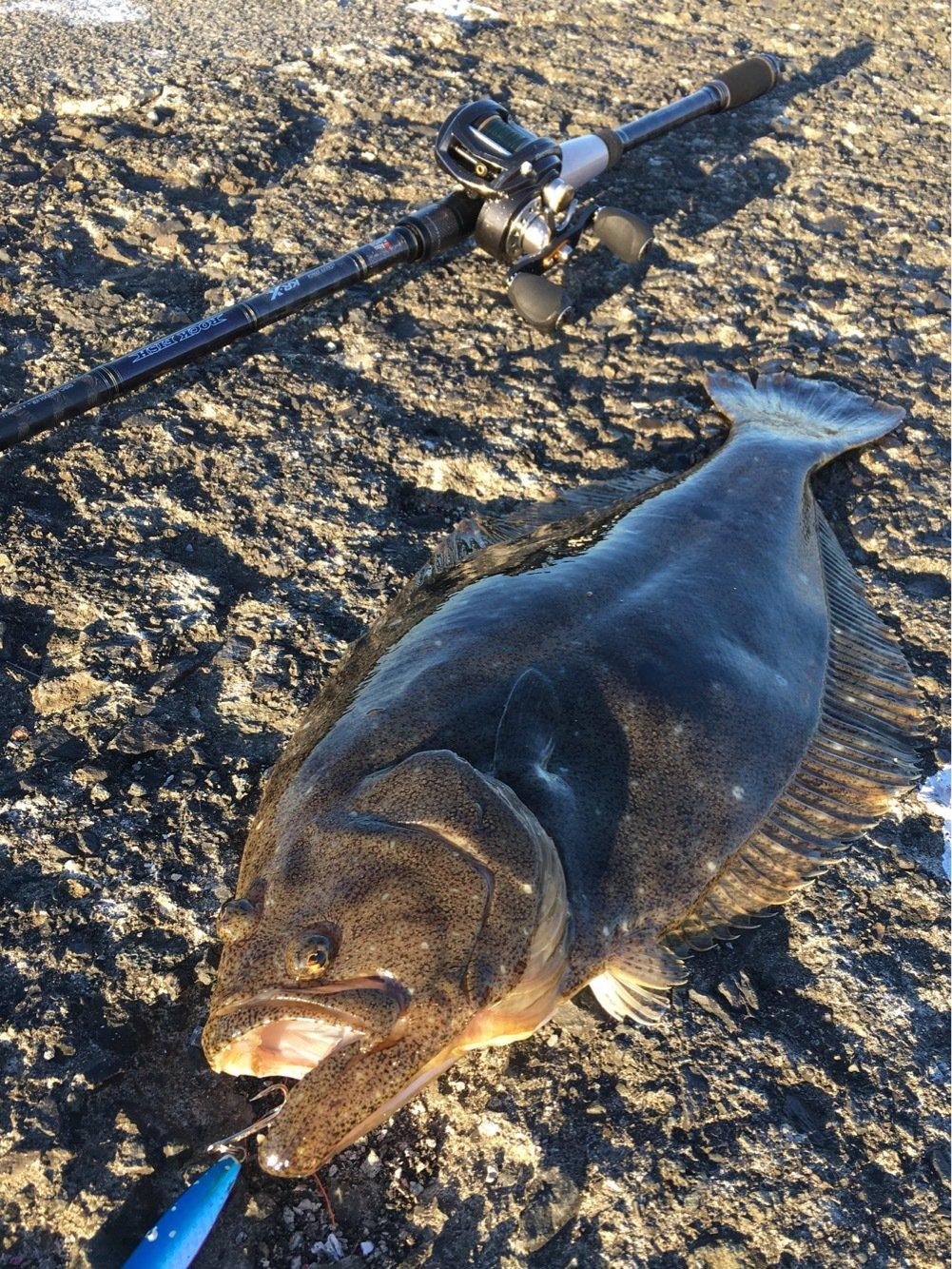 ずまさんの投稿画像,写っている魚はヒラメ