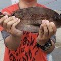 だいちさんの愛知県碧南市での釣果写真