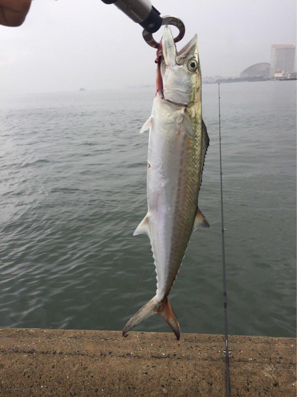 kensukekさんの投稿画像,写っている魚はサワラ