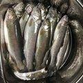 わたるさんさんの山梨県での釣果写真