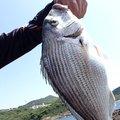 teketekeさんの宮崎県での釣果写真